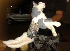 cat-crime